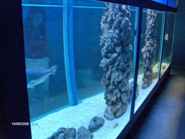 podrumu imaju jedan veliki akvarij od po mojoj procjeni najmanje ...
