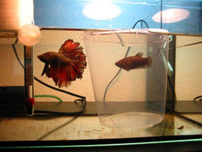 mjesta za upoznavanje puno ribe upoznavanje s Smithom i Wessonom 28-2